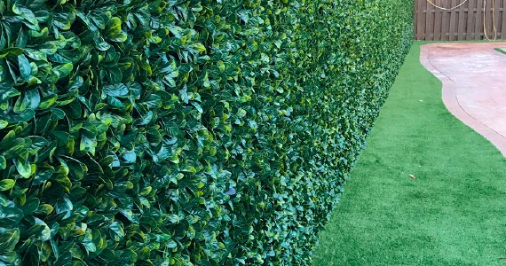 Ivy Walls - Top Turf Miami