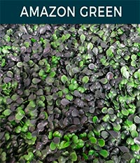 amazon green - Ivy wall | Top Turf Artificial Grass