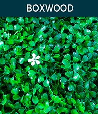 boxwood - Ivy wall | Top Turf Artificial Grass