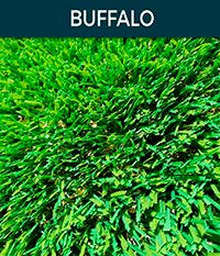 buffalo - Artificial Grass | Top Turf Artificial Grass