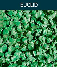 euclid - Ivy wall | Top Turf Artificial Grass