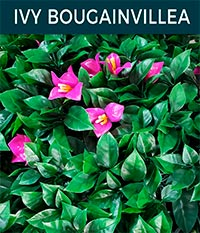ivy bougainvillea - Ivy wall | Top Turf Artificial Grass