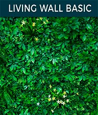 living wall basic - Ivy wall | Top Turf Artificial Grass